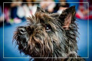 Jak nauczyć psa komendy zwalniającej?